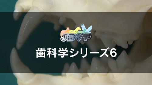歯科学06「猫の歯科学 -犬とは異なる猫の歯科治療 吸収病巣と口内炎などの治し方-」