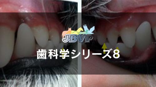 歯科学08「犬猫の歯並びが悪い時,どのように対処すべきか? -最低限知っておくべき不正咬合の話-」