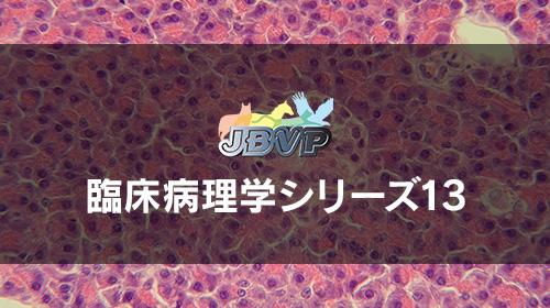 臨床病理学13「膵外分泌部の疾患」
