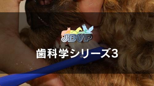 歯科学03「間違えやすいデンタルホームケア − 歯を磨くだけじゃ不十分です。飼い主に正しく指導しましょう! −」