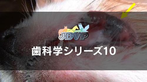 歯科学10「犬猫に多く見られる口腔内腫瘍の対処方法 -注意すべき口腔内腫瘍の観察ポイントと対処方法-」