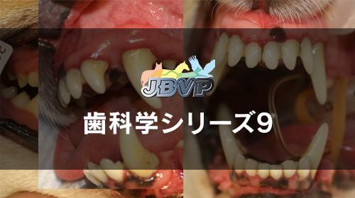 歯科学09「口腔外科の基礎 -骨折・顎切除・フラップ形成など-」